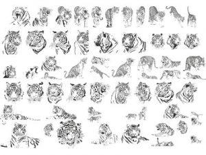 тигры в векторе